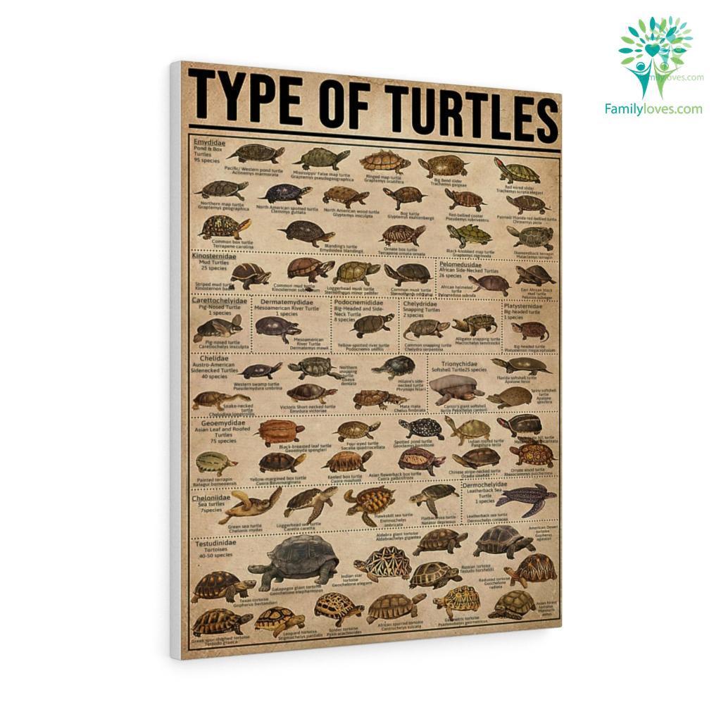 Type Of Turtles Canvas Familyloves.com